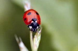 ladybug1_answer_2_xlarge
